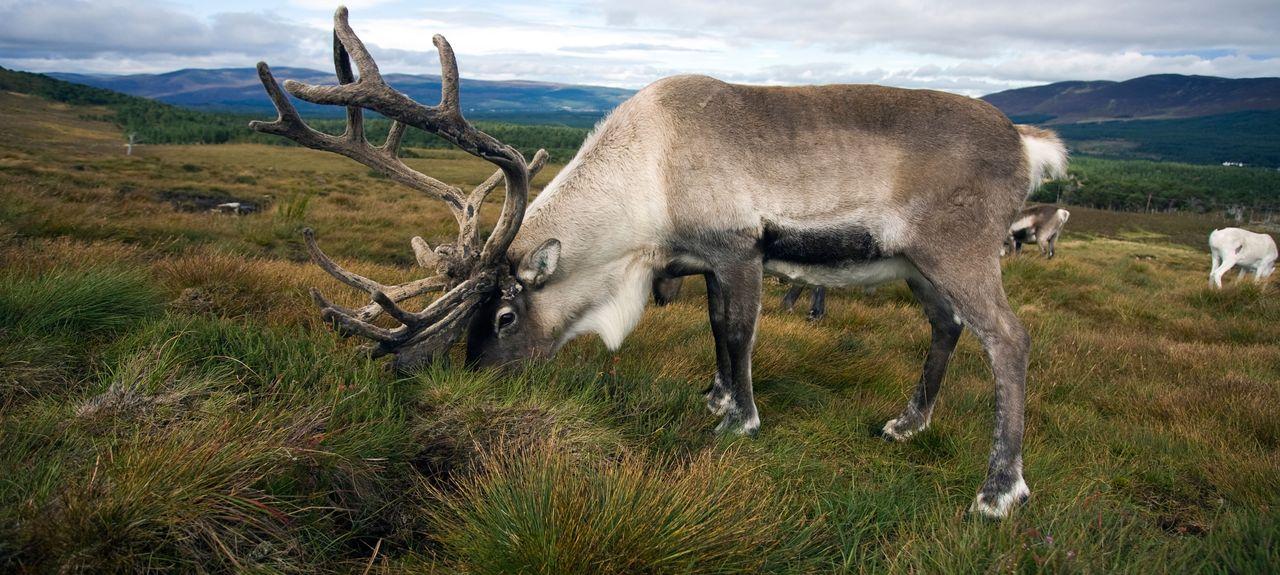 Cairngorms National Park, Skottland, Storbritannia