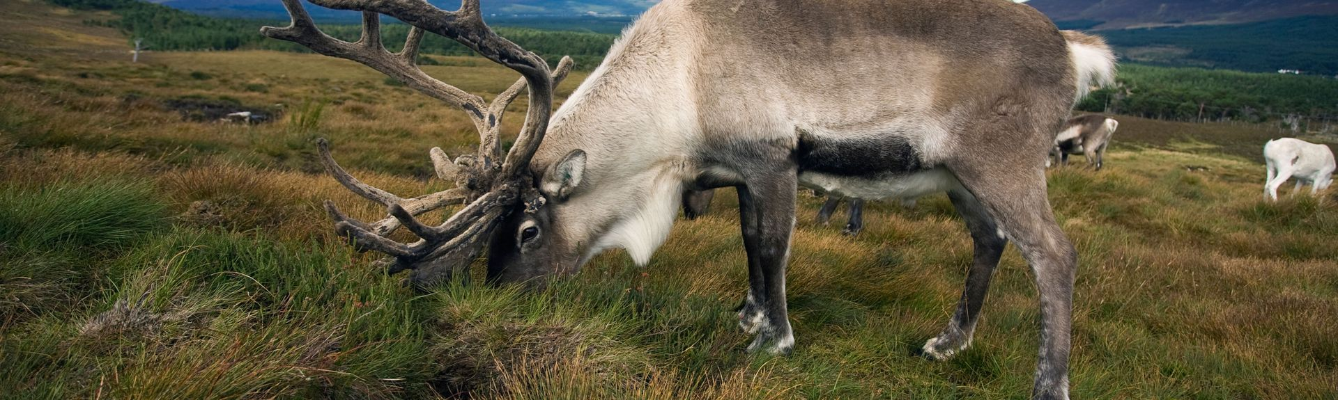 Cairngorms Nationalpark, Skotland, Storbritannien