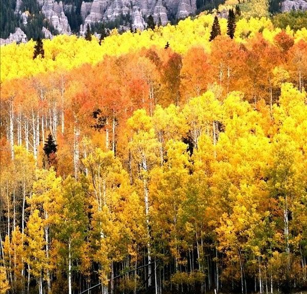 Montrose, Colorado, Estados Unidos