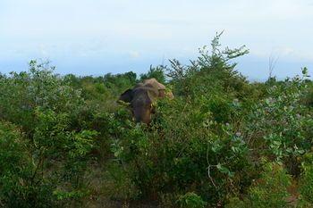 Hambantota, Province du Sud, Sri Lanka