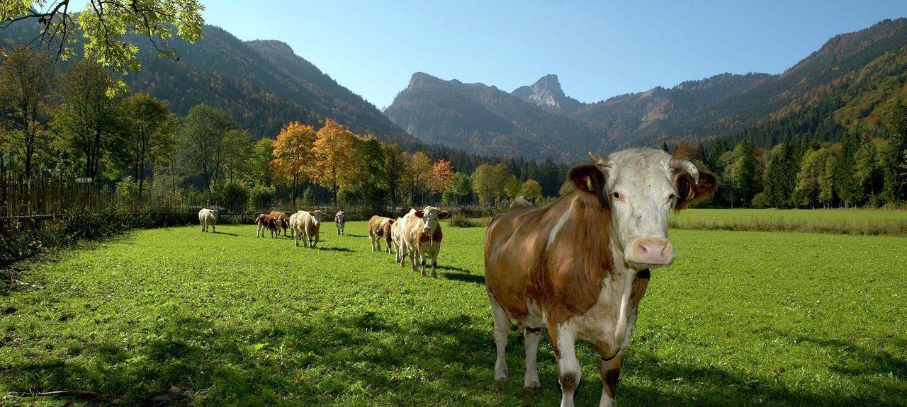 Chiemgau Alps, Ruhpolding, Germany