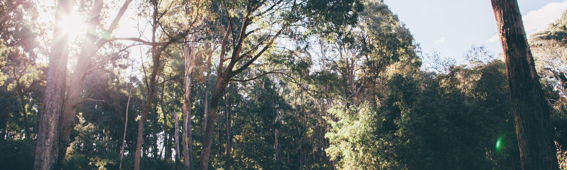 Whorouly, Austrália