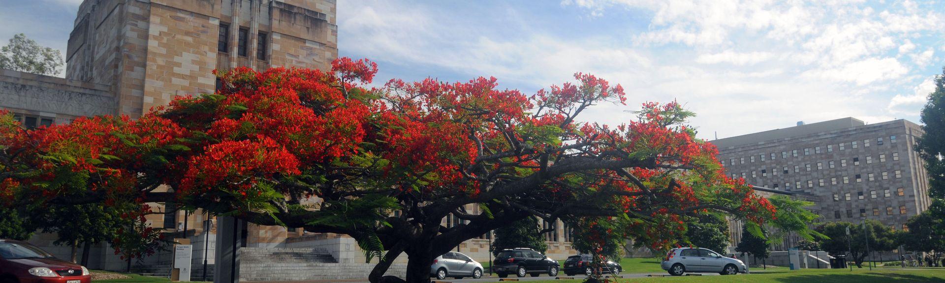 St. Lucia, Brisbane, Queensland, Australië