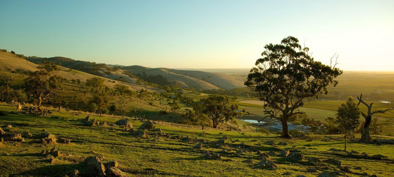 Tanunda SA, Australia