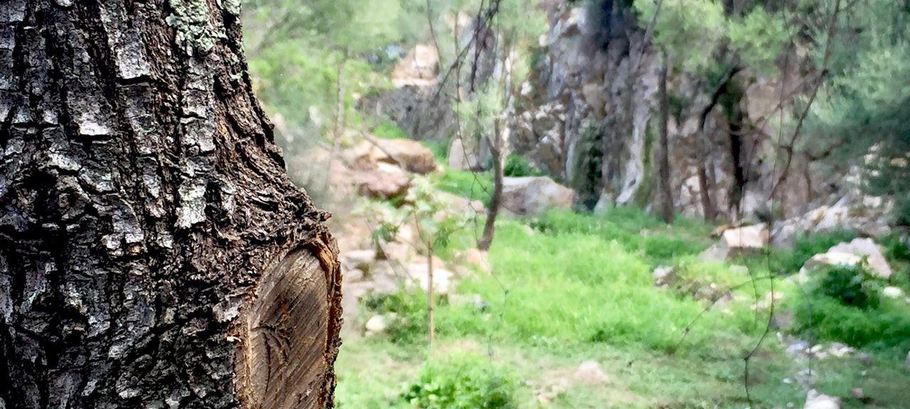 Stagno di Cala Brandinchi, San Teodoro, Sardegna, Italia