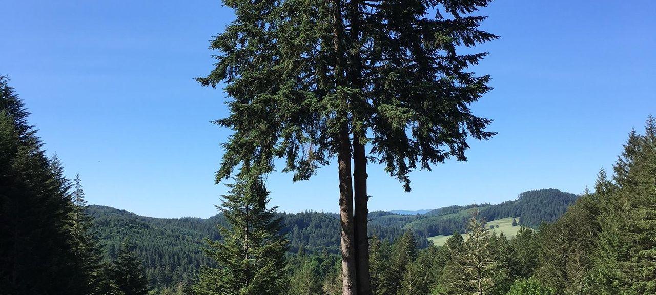 Sheridan, Oregon, Vereinigte Staaten