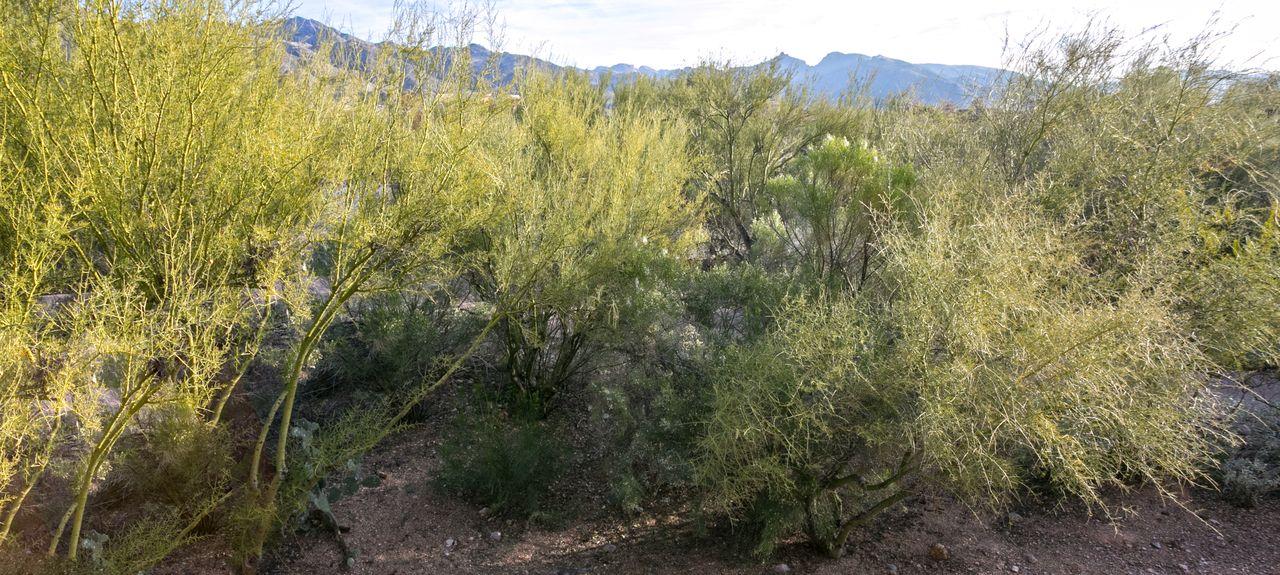 Greens at Ventana Canyon, Catalina Foothills, AZ, USA
