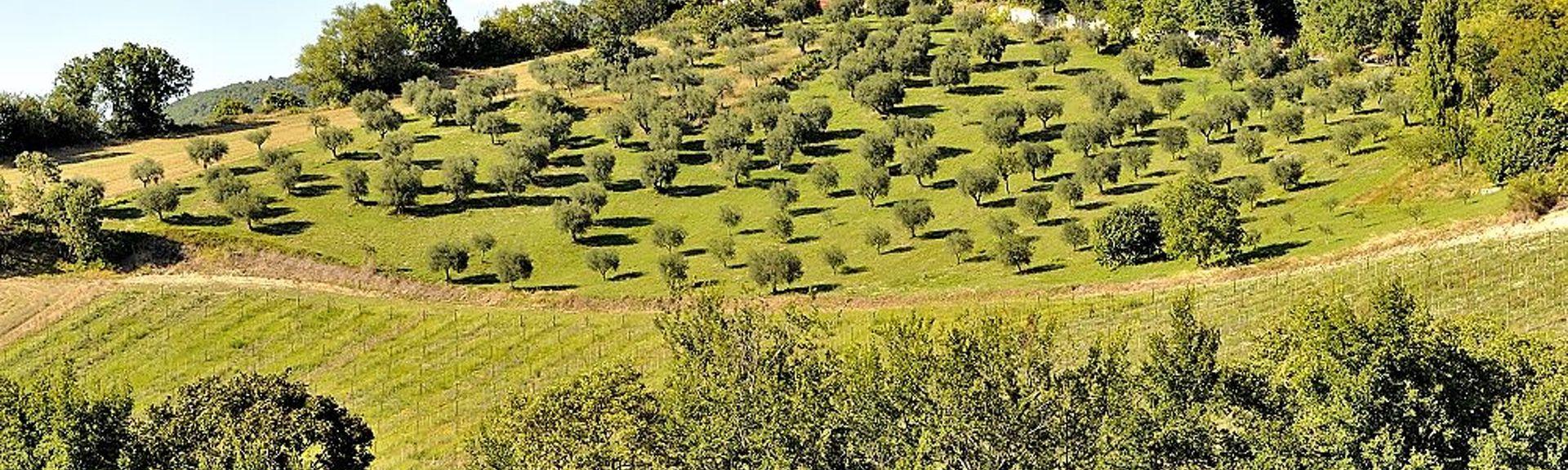 Ranghiasci Park, Gubbio, Umbria, Italy