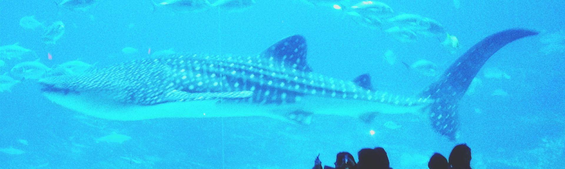 Georgia Aquarium, Atlanta, Georgia, United States of America