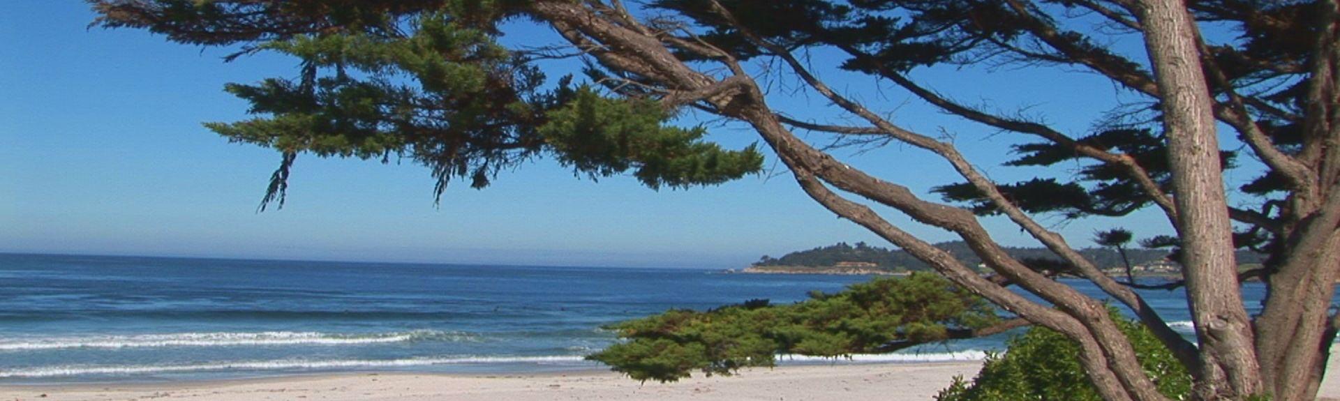 Playa estatal Moss Landing, Moss Landing, California, Estados Unidos