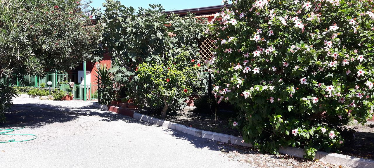 Somma Vesuviana, Campanie, Italie