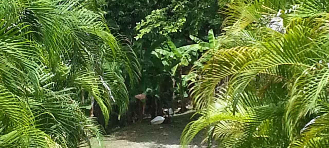 Lepanto, Costa Rica