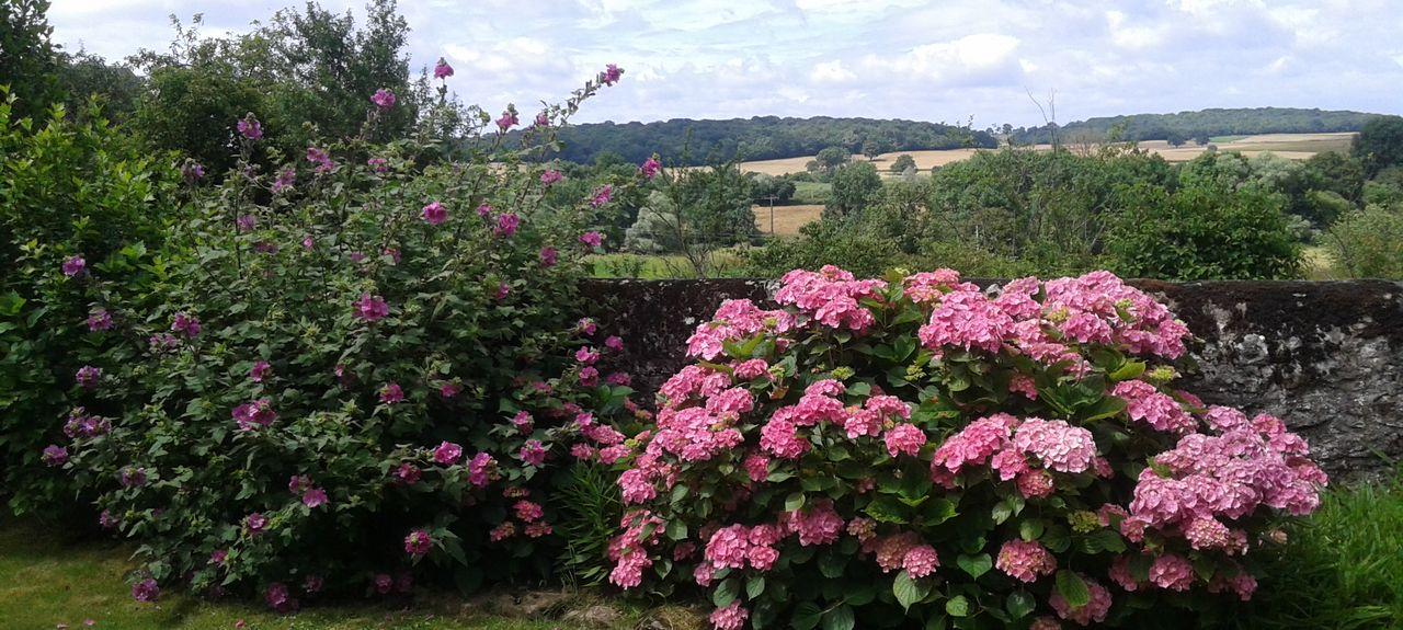Nièvre, Borgogna-Franca Contea, Francia