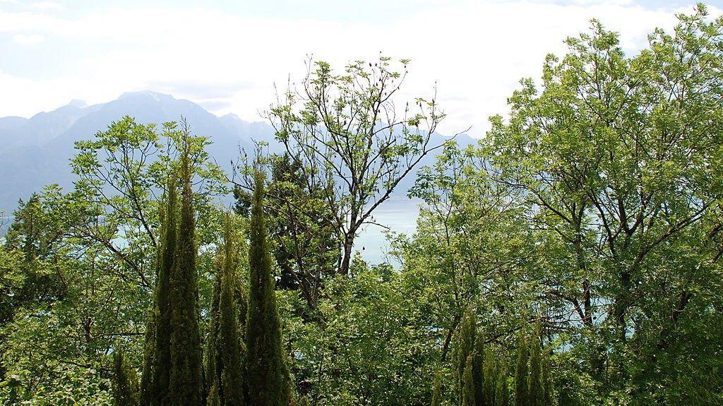 Ormont-Dessus, Kantonen Vaud, Schweiz