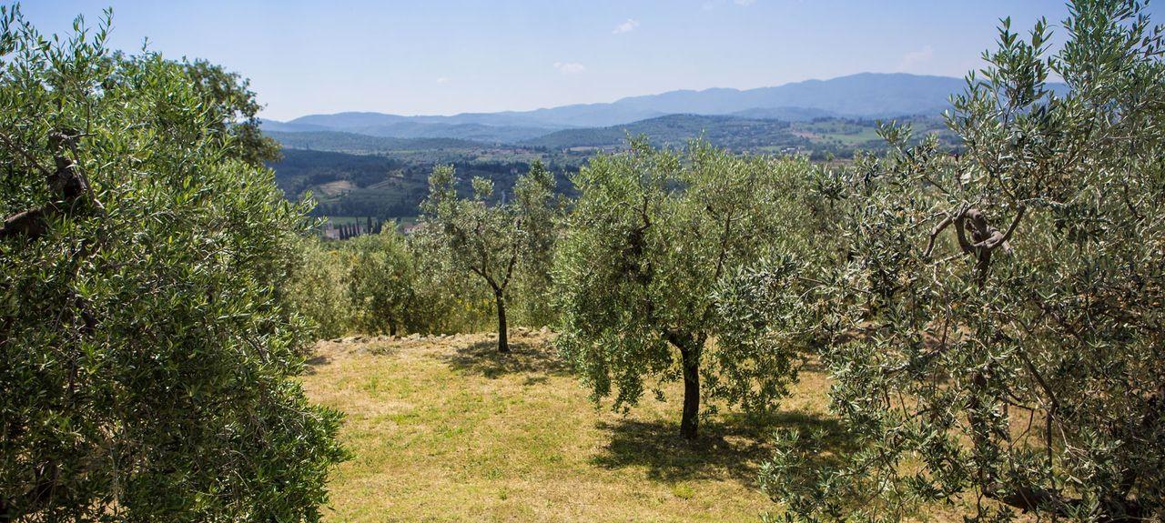 Castiglion Fiorentino, Arezzo, Tuscany, Italy