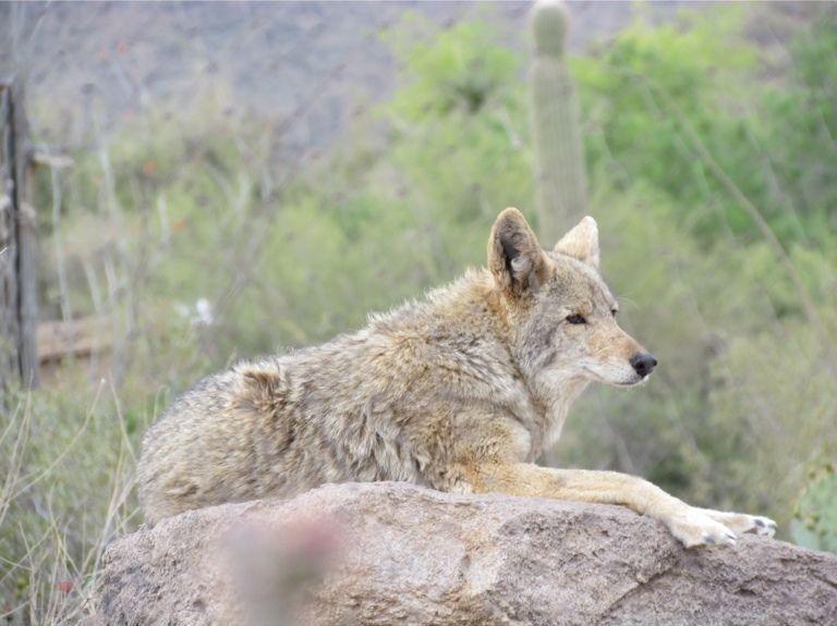 Madera Canyon, Green Valley, Arizona, United States of America