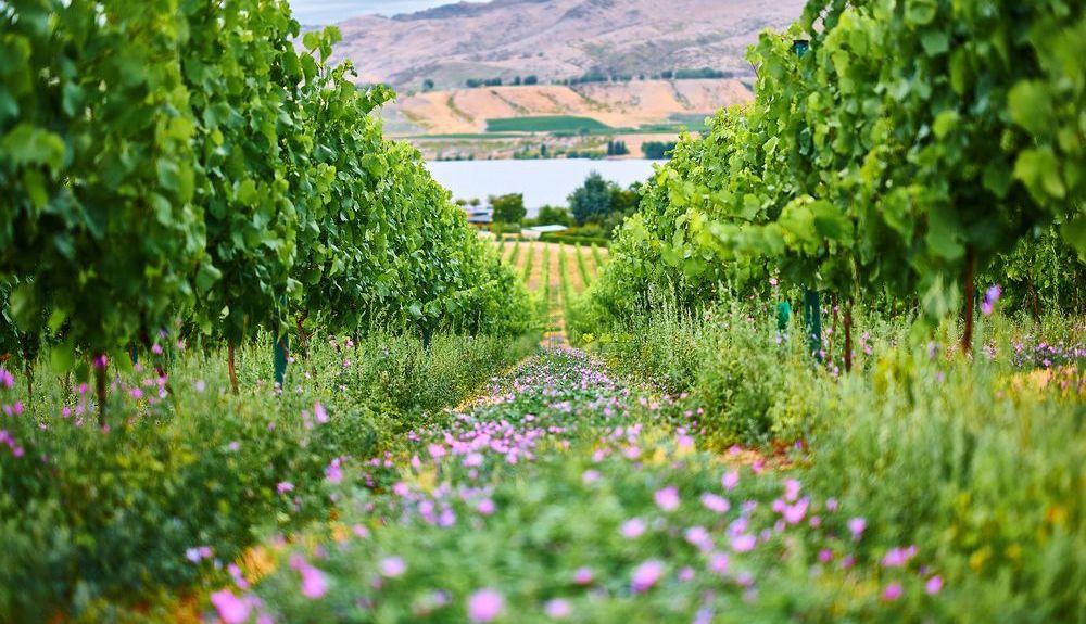 Gibbston Valley Winery, Gibbston, South Island, New Zealand