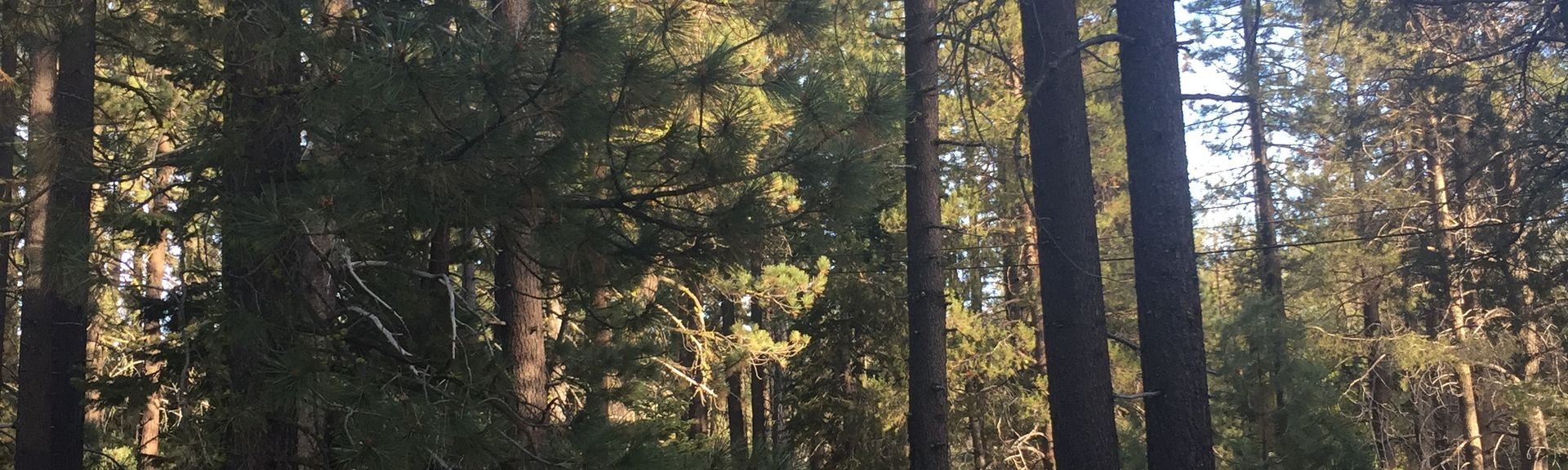 Vrbo | Donner Lake Woods, Truckee Vacation Rentals: cabin