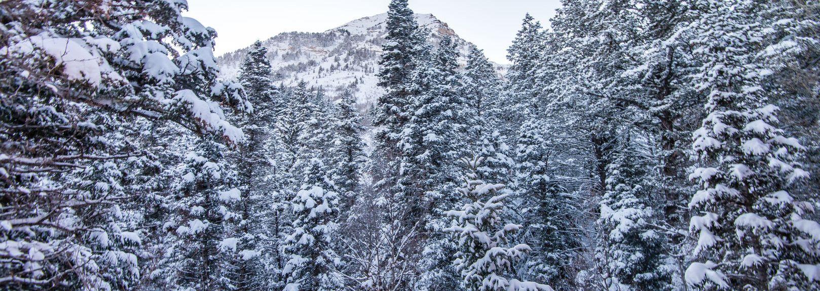 Timpanogos Cave National Monument, Utah, Verenigde Staten