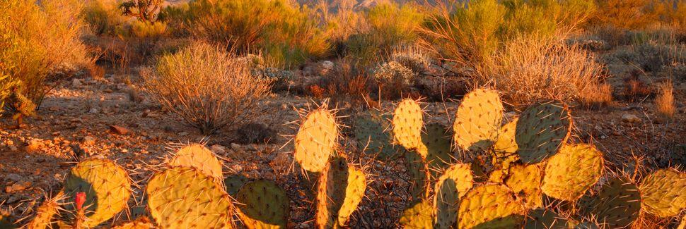 Oro Valley, AZ, USA