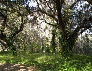 Villa Sol (Kissimmee, Florida, Stati Uniti d'America)