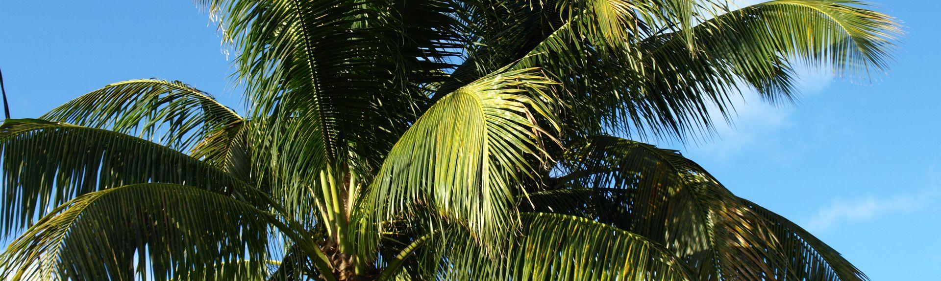 Bel Air Isle, Lauderdale-by-the-Sea, Florida, Vereinigte Staaten