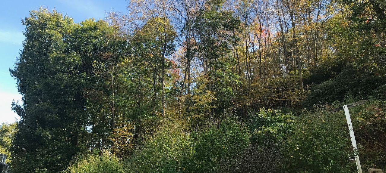 Nesquehoning, Pennsylvania, Vereinigte Staaten