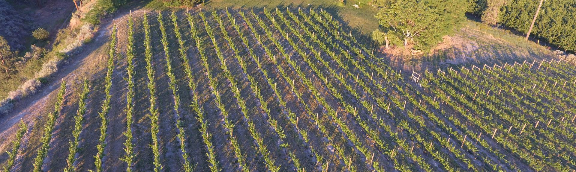Therapy Vineyards, Naramata, British Columbia, Canada