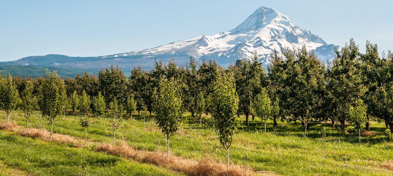 Mount Hood, Oregon, États-Unis d'Amérique