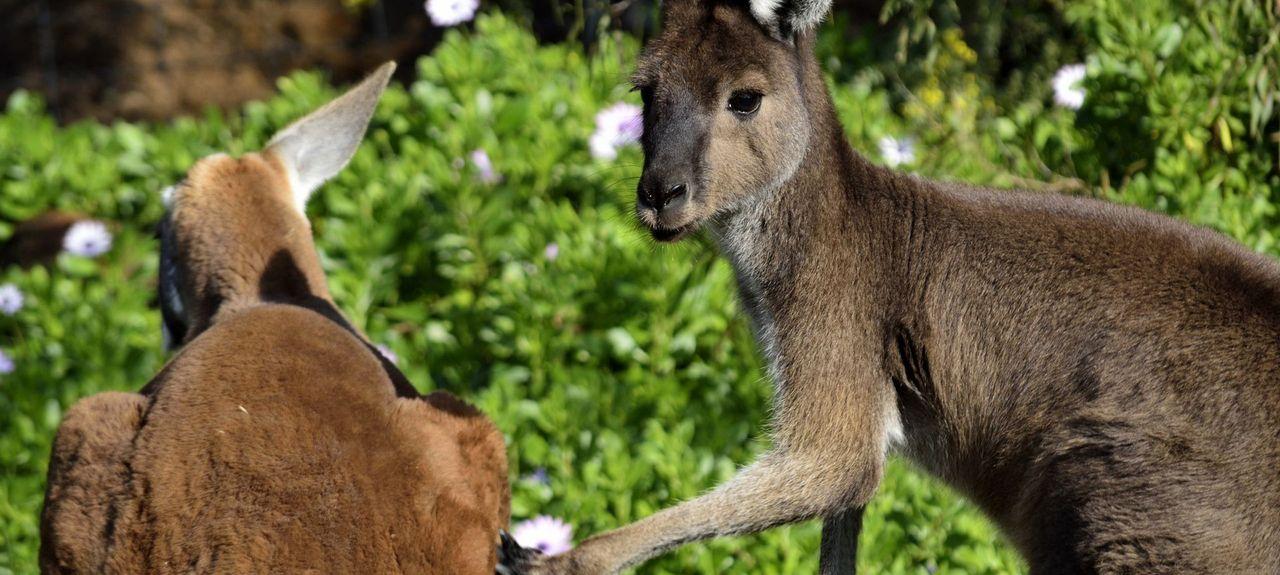 Middlesex, Australie-Occidentale, Australie