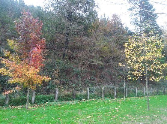 Arratia-Nerbioi, País Basco, Espanha