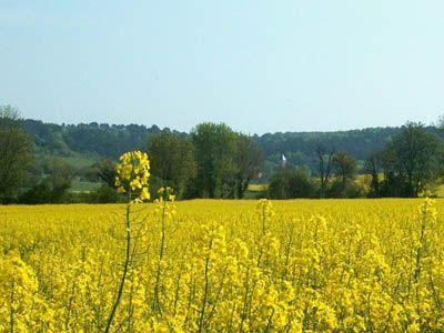 Stigny, Bourgogne-Franche-Comté, France