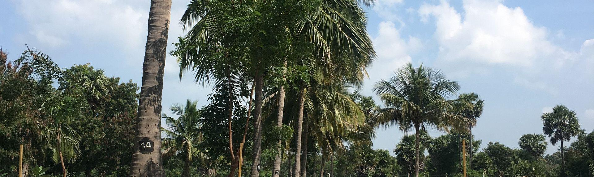 Tamil Nadu, Índia