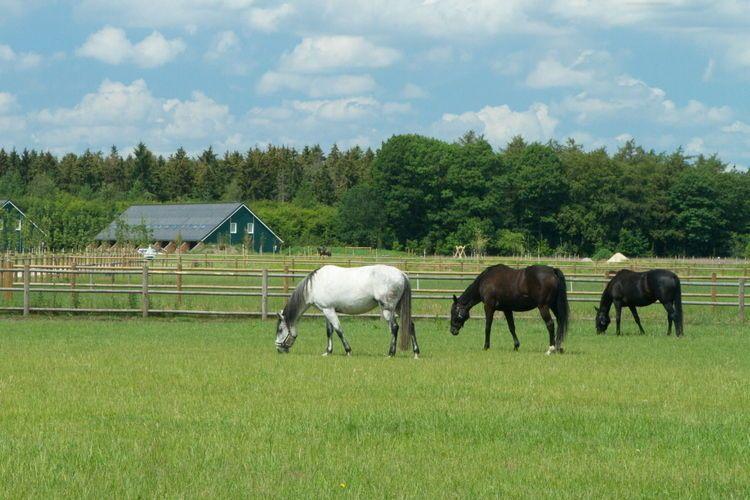 Dalen, Drenthe, Pays-Bas