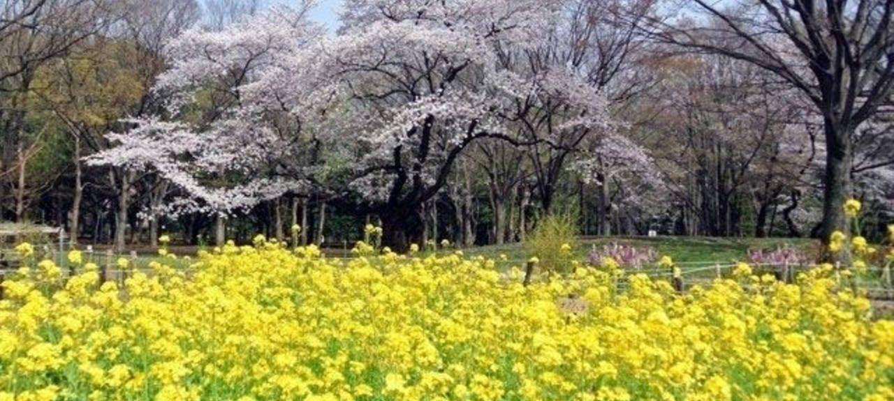 Minato-ku, Tokyo, Tokyo, Japon