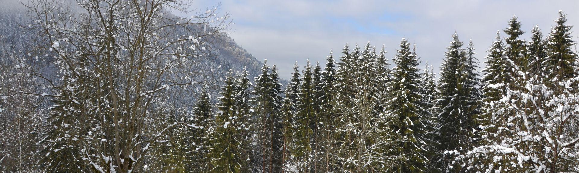 Weissenelf Ski Lift, Spital am Semmering, Styria, Austria