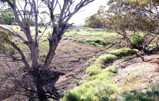 Murbko SA, Australia