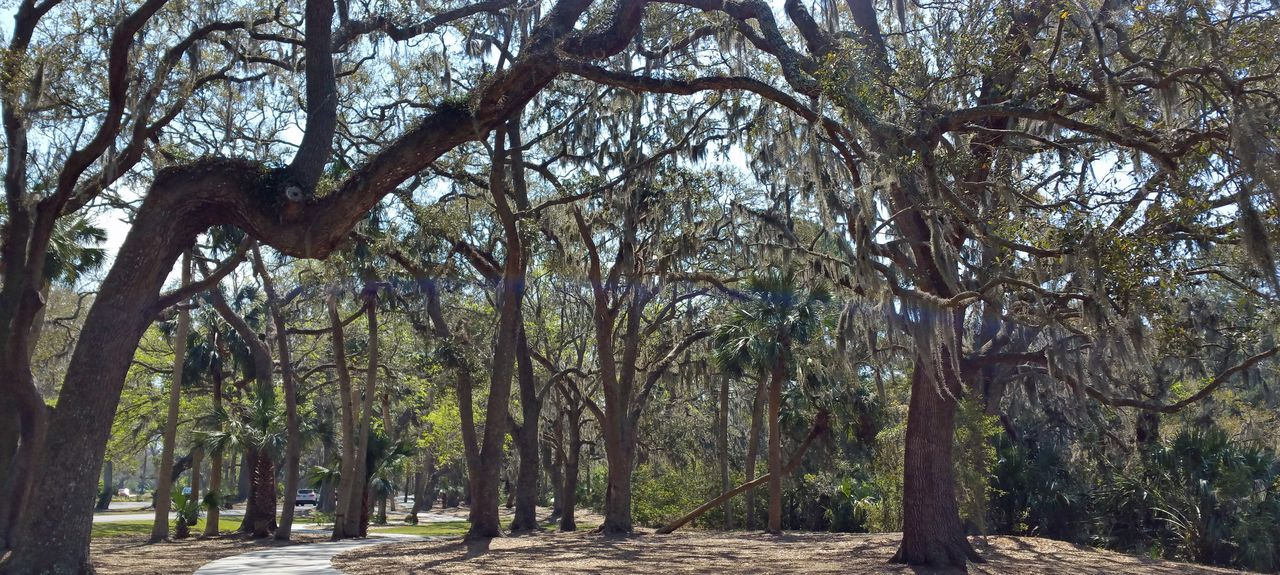 Windsor Court (Hilton Head Island, South Carolina, United States)