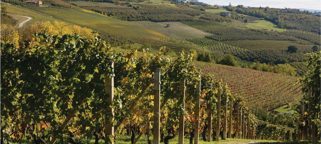 Cortazzone, Asti, Piedmont, Italy