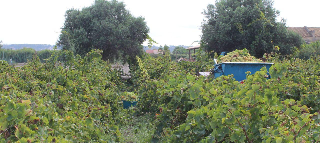 Riserva Naturale dello Stagnone, Marsala, Sicilia, Italia
