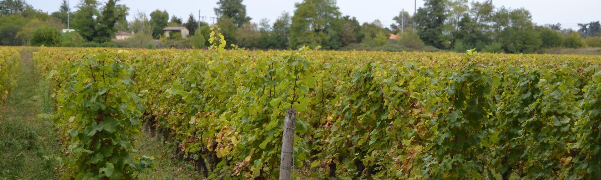 Villandraut, Aquitaine-Limousin-Poitou-Charentes, Francja