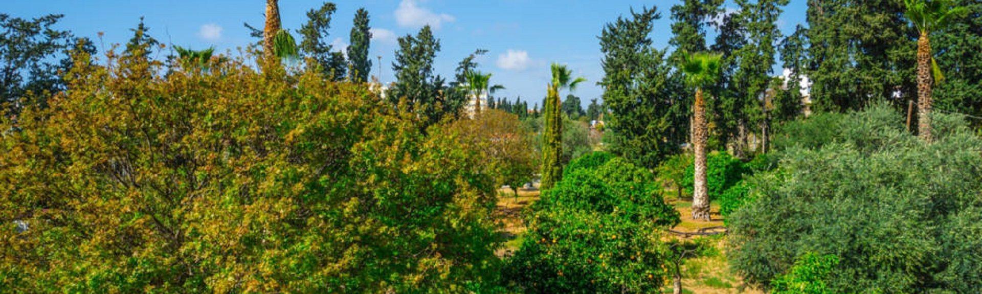 Neapolis, Γεροσκήπου, Πάφος, Κύπρος