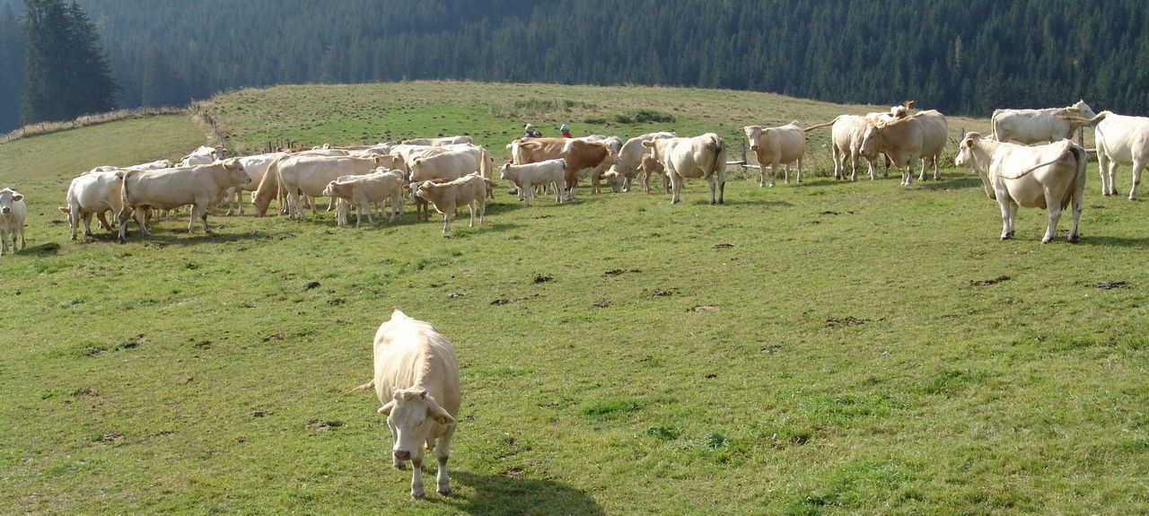Gemeinde Magdalensberg, Austria