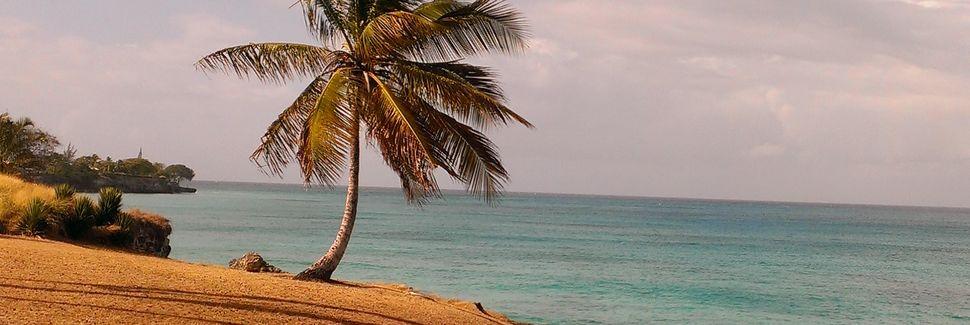 Gibbons, Oistins, Barbados