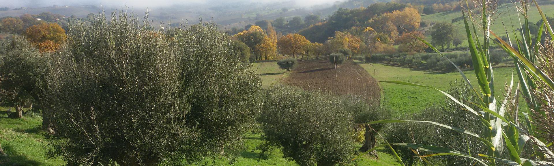 Treia, Marches, Italie