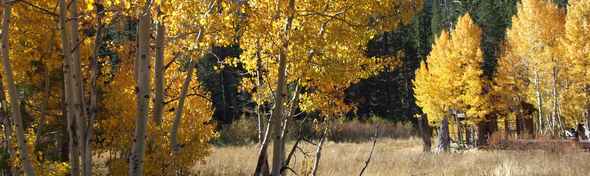 Carnelian Woods, Carnelian Bay, Californië, Verenigde Staten