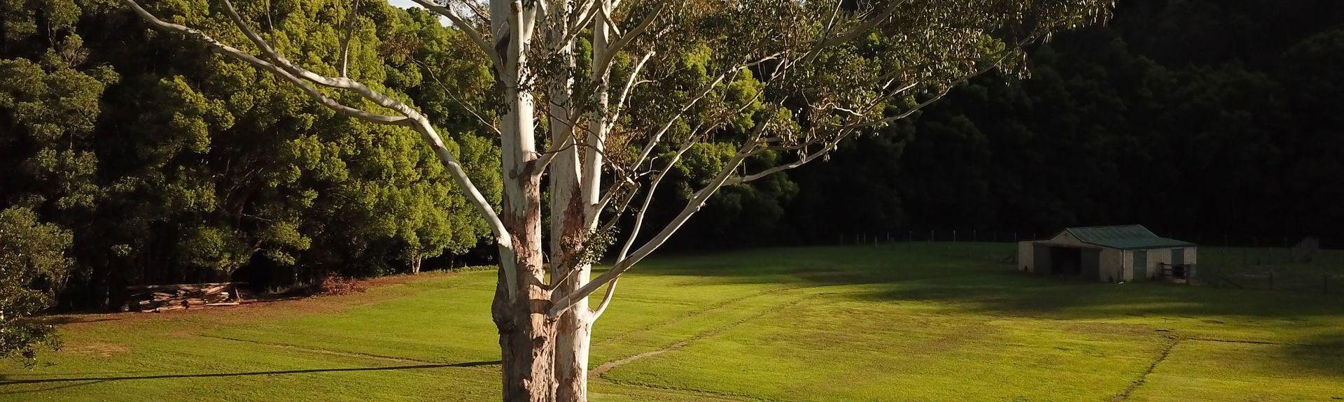 Cedar Creek, Tweed, NSW, Australia