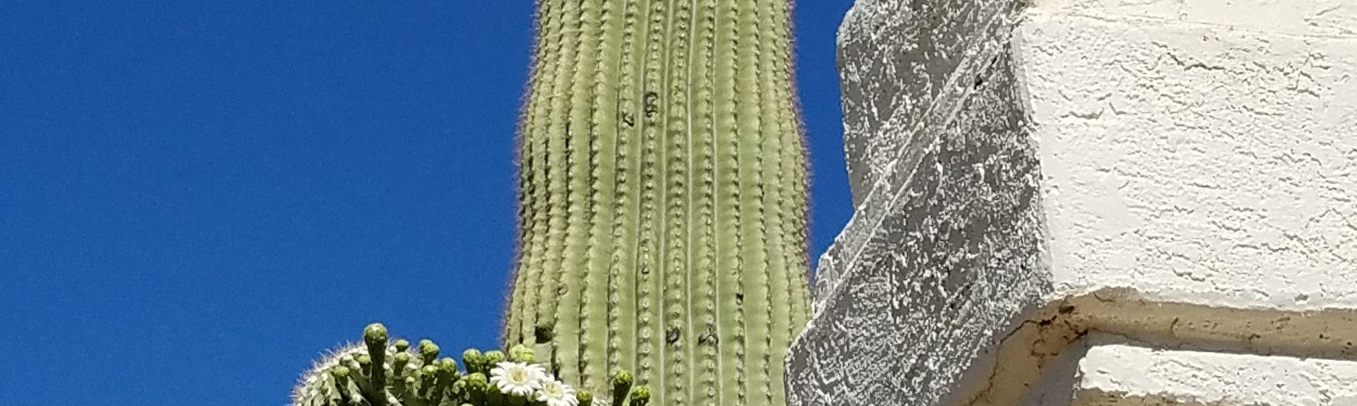 Christopher Columbus Park, Tucson, Arizona, Estados Unidos
