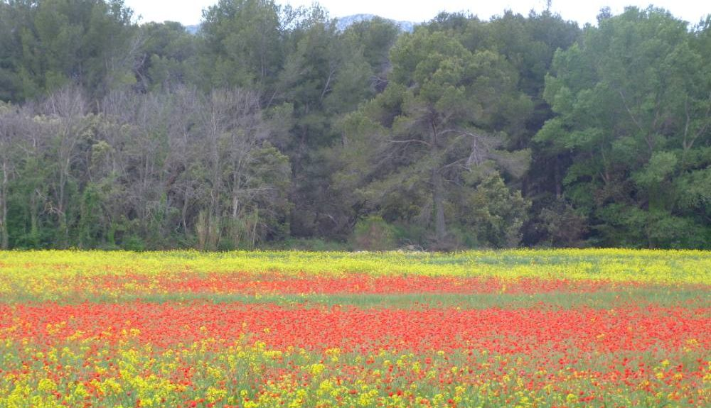 Graveson, Provence-Alpes-Côte d'Azur, França