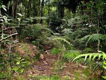 Ohaeawai, Far North, Northland, New Zealand